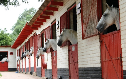 Solar Ventilation is ideal for ventilation of Horse Stables