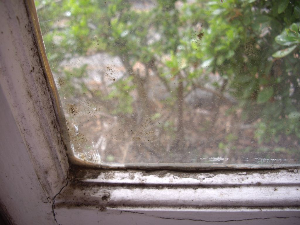 Window Fram Which Has Mould