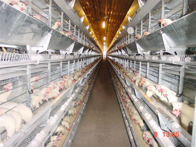 chicken coop poultry ventilation